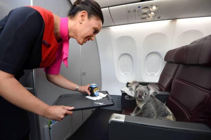 koala-qantas-1-data